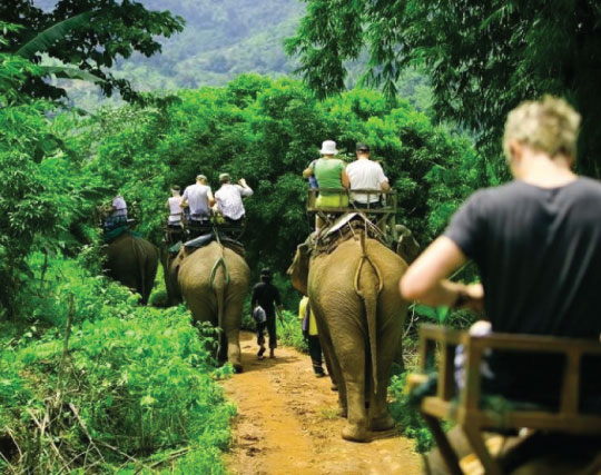 elephant conservation tour in chiang mai